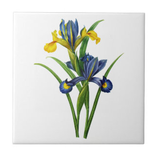 Blue and Yellow Iris By Redoute Ceramic Tile