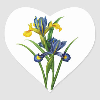 Blue and Yellow Iris By Redoute Heart Sticker