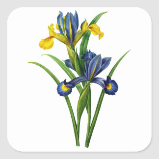 Blue and Yellow Iris By Redoute Square Sticker