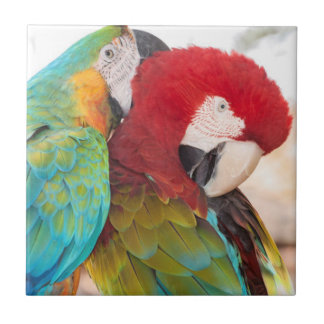 Blue-and-Yellow Macaw and Scarlett Macaw Ceramic Tile