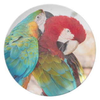 Blue-and-Yellow Macaw and Scarlett Macaw Dinner Plates