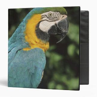 Blue and Yellow Macaw, Ara aurarana), 3 Ring Binder