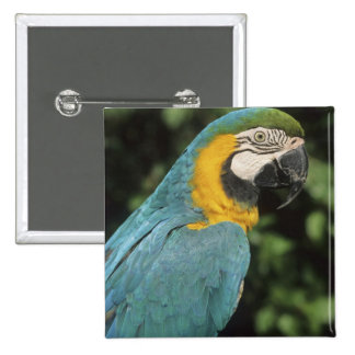 Blue and Yellow Macaw, Ara aurarana), Button