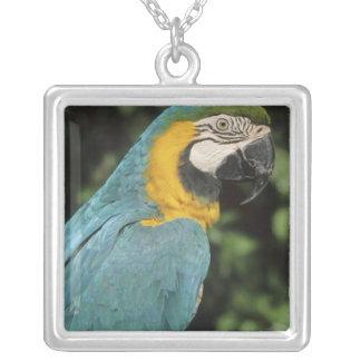 Blue and Yellow Macaw, Ara aurarana), Square Pendant Necklace