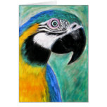 Blue And Yellow Macaw Cards