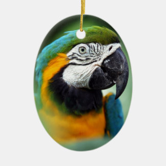 Blue-and-yellow Macaw Ceramic Ornament
