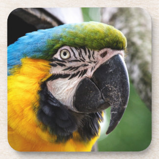 Blue and yellow macaw coaster