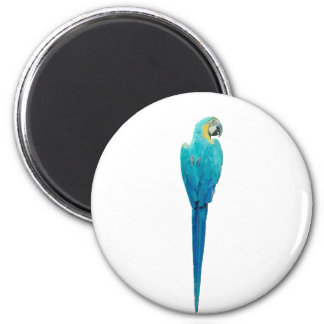 Blue and Yellow Macaw from Junglewalk.com Magnet