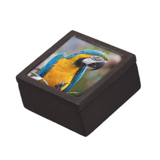 Blue and Yellow Macaw Gift Box