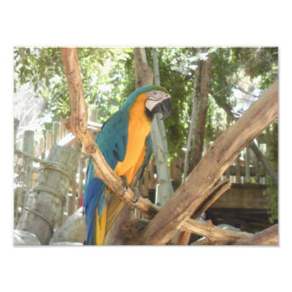 Blue And Yellow Macaw In A Tree Art Photo