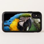 Blue and Yellow Macaw iPhone X case