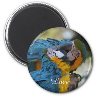 Blue and Yellow Macaw Magnet