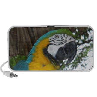 blue and yellow macaw parrot doodle travelling speaker