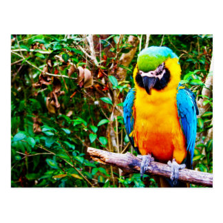 Blue-and-Yellow Macaw Postcard