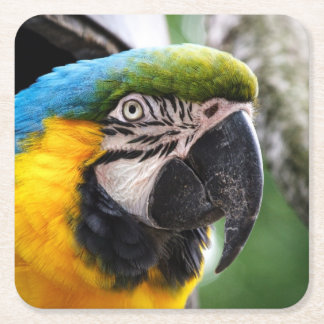 Blue and yellow macaw square paper coaster