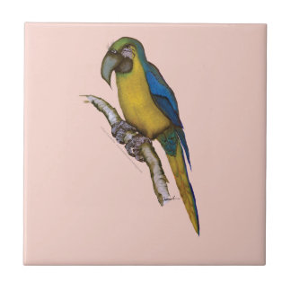 blue-and-yellow macaw, tony fernandes.tif ceramic tile