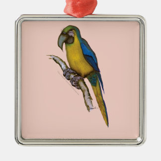 blue-and-yellow macaw, tony fernandes.tif metal ornament