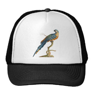 Blue-and-yellow Macaw Trucker Hat