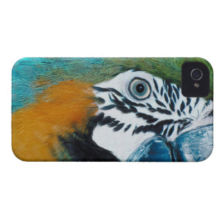Blue-and-yellow MacawÊ Case-Mate iPhone 4 Case