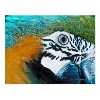 Blue-and-yellow MacawÊ Postcard