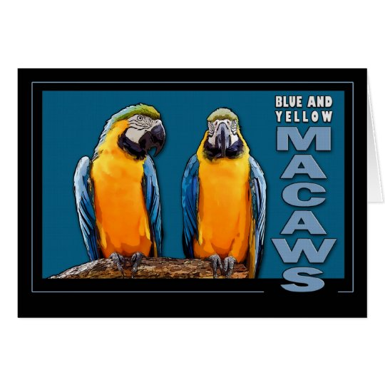 Blue and Yellow Macaws Card