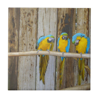 BLUE AND YELLOW MACAWS, RUSTIC STYLE PARROT GIFTS CERAMIC TILE