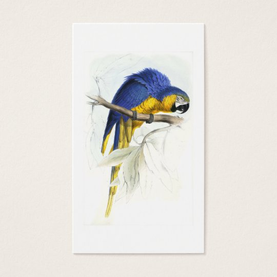Blue and Yellow Maccaw by Edward Lear Business Card