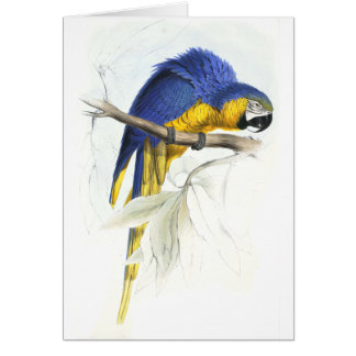 Blue and Yellow Maccaw by Edward Lear Card