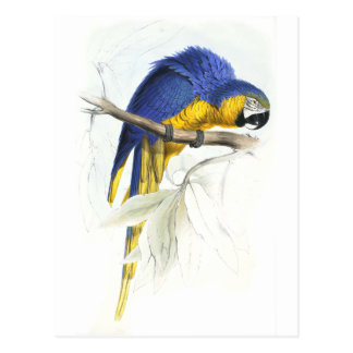 Blue and Yellow Maccaw by Edward Lear Postcard