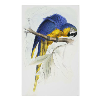 Blue and Yellow Maccaw by Edward Lear Poster