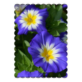 Blue and Yellow Morning Glories 5x7 Paper Invitation Card