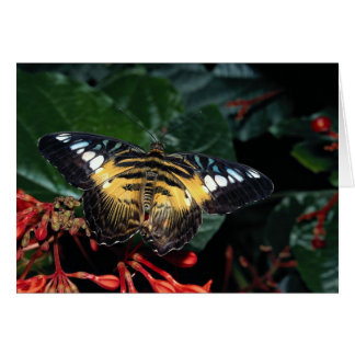 Blue and yellow triangle Graphium sp Southeast Cards