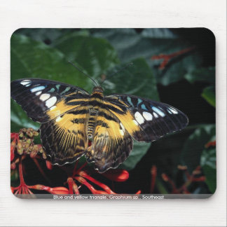 Blue and yellow triangle Graphium sp Southeast Mouse Pads