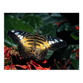 Blue and yellow triangle Graphium sp Southeast Postcards