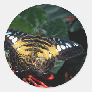 Blue and yellow triangle Graphium sp Southeast Stickers