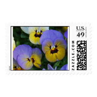 Blue and Yellow Violas Stamps