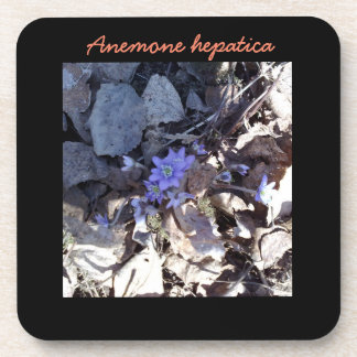 Blue Anemone Flower Beverage Coaster