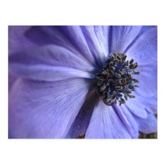 Blue Anenome - Happy Birthday Postcard