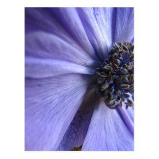 Blue Anenome - Happy Birthday Post Cards