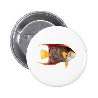 Blue Angelfish saltwater Buttons