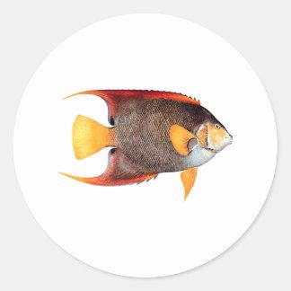 Blue Angelfish (saltwater) Classic Round Sticker