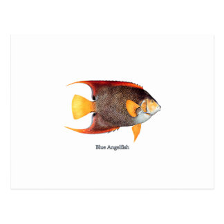 Blue Angelfish (saltwater) Postcard