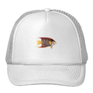 Blue Angelfish (saltwater) Trucker Hat