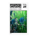 Blue Angelfish Stamps