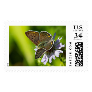 Blue Argus Postage