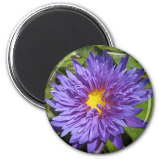 Blue Aster 2 Inch Round Magnet