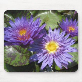 Blue Aster Mouse Pad