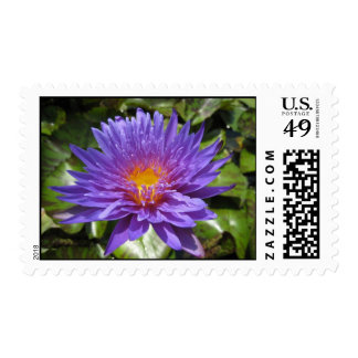 Blue Aster Postage Stamps