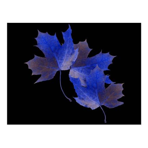 Blue Autumn Leaves Post Card