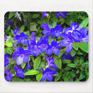 Blue Azalea Flowers Mouse Pad